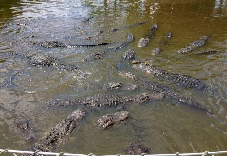 Guide de voyage d'Orlando : Les principales attractions à voir absolument