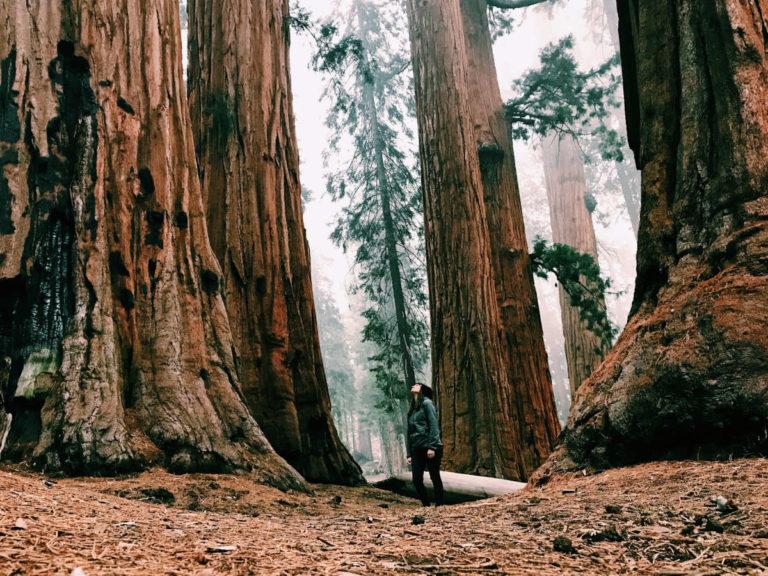 Aventures et randonnées dans les parcs nationaux du sud-ouest américain